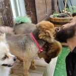 תמונות באלו מלון בוטיק לכלבים (103)