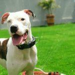 תמונות באלו מלון בוטיק לכלבים (157)