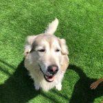 תמונות באלו מלון בוטיק לכלבים (163)