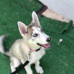 תמונות באלו מלון בוטיק לכלבים (164)