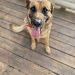 תמונות באלו מלון בוטיק לכלבים (166)