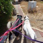תמונות באלו מלון בוטיק לכלבים (52)