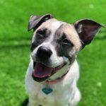 תמונות באלו מלון בוטיק לכלבים (58)