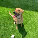 תמונות באלו מלון בוטיק לכלבים (60)