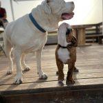 תמונות באלו מלון בוטיק לכלבים (66)
