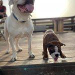 תמונות באלו מלון בוטיק לכלבים (67)