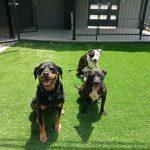 תמונות באלו מלון בוטיק לכלבים (75)