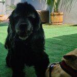 תמונות באלו מלון בוטיק לכלבים (98)